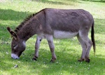 Did you know donkeys can talk?
